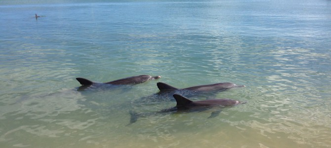 Tag 10 – Die Delphine von Monkey Mia