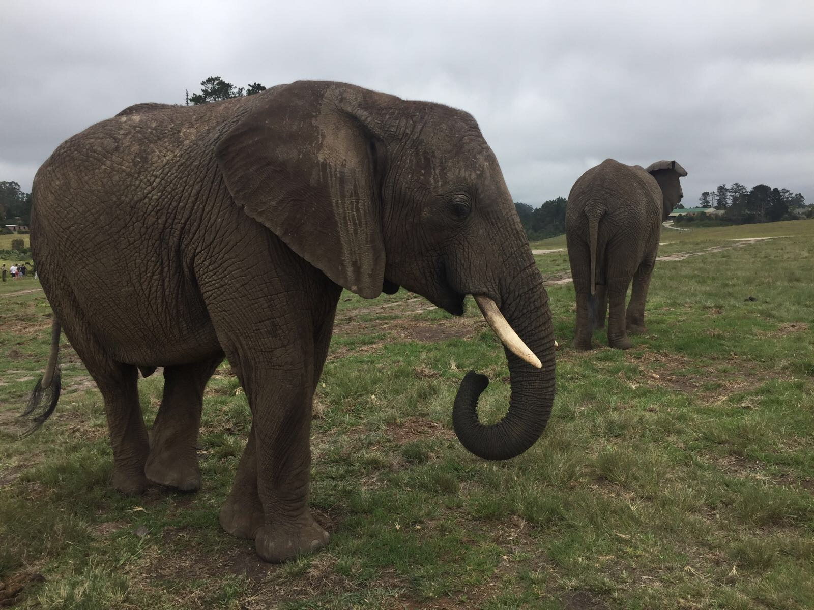 Knysna Elephant Park und Plettenberg Bay